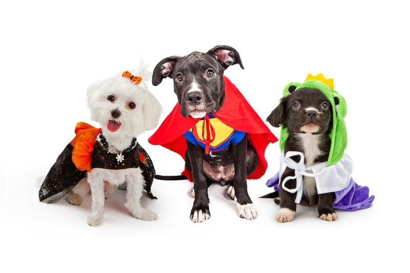 Pet-Halloween-Costume